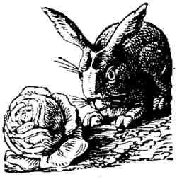 rabbit.and.lettuce