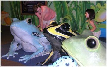 """The """"Frog Bog"""""""