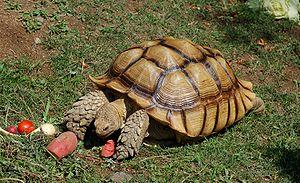 Not the same tortoise that we met
