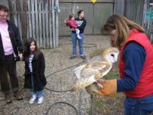 Caelyn meets a Barn Owl