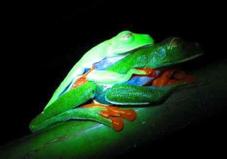 treefrog.3