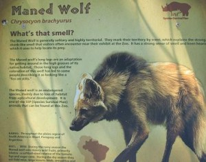 Maned Wolf sign