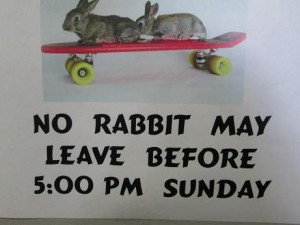 no.rabbit.may.leave