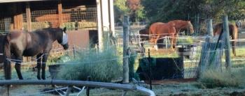 horses.sm